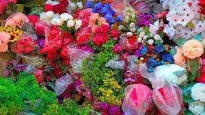 محل أزهار في محافظة الأحمدي